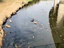 Residuos humanos, contaminación, Nueva Deli, la India fotografía de archivo
