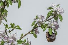 Resiliência - maçã velha cercada na vida nova foto de stock royalty free