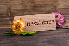 Resilience word royalty free stock image