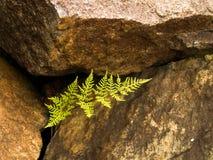 Resilienza Immagini Stock