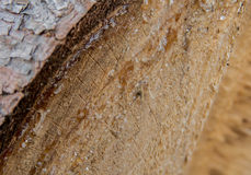 Resin on spruce wood Stock Image