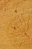 Resina de madeira Imagem de Stock