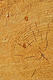 Resina de madera imagen de archivo