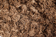 Resinous granules or powder of Agarwood (Aquilaria crassna). Stock Photo