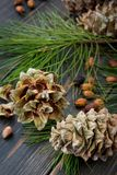 Resinous husked pine-cones with pine nuts, needles and pine bran. Ches on dark wooden background Royalty Free Stock Image