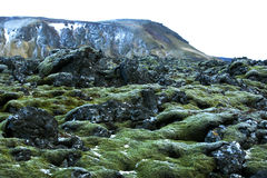 Resistant moss on volcanic rocks in Iceland Royalty Free Stock Photography