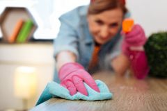 Resolute accurate hard-working woman wiping dust from wooden table. Spraying cleaning product. Resolute accurate hard-working woman wiping dust from wooden table stock images