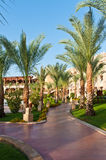 Resort. Palm treas in a beautiful resort Royalty Free Stock Photography