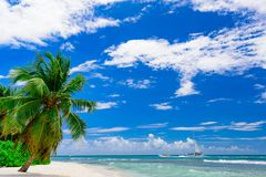 Resort beach palm tree sea Royalty Free Stock Image