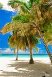 Resort beach palm tree sea. Caribbean Sea coast white sand resort beach palm tree Dominican Republic Stock Photography