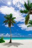Resort beach palm tree sea Stock Image