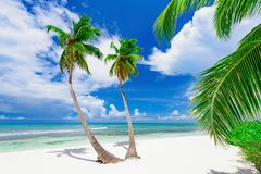 Resort beach palm tree sea Dominican Republic. Caribbean Sea coast white sand resort beach palm tree Dominican Republic Stock Photography