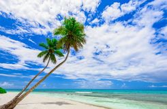 Resort beach palm tree sea Dominican Republic. Caribbean Sea coast white sand resort beach palm tree Dominican Republic Stock Image