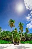 Resort beach palm tree sea Dominican Republic. Caribbean Sea coast white sand resort beach palm tree Dominican Republic Stock Photo