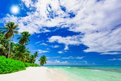 Resort beach palm tree sea Dominican Republic. Caribbean Sea coast white sand resort beach palm tree Dominican Republic Royalty Free Stock Image