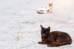 Resort cat basking in sun Stock Photography