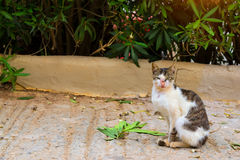 Resort cat basking in sun Royalty Free Stock Photography