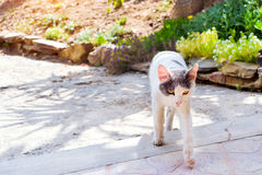 Resort cat begging food Stock Photo