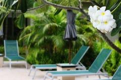 Resort flowers royalty free stock photo