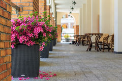 A resort hotel outdoor terrace with pots of scarlet blooming flowers at summer. Perspective view Stock Photos