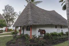Resort hotel on Zanzibar Island Royalty Free Stock Image