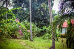 Resort with houses and palm in the jungle, rainy Stock Photography