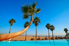 Resort infinity pool in a beach with palm trees. Resort infinity pool in the beach with bent palm trees paradise Royalty Free Stock Photos