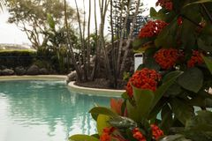 Resort Pool Luxuries. Framed by beautiful local red flowers and green leaves Stock Image