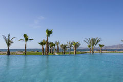 Resort Pool with Palm Tree and Sea View Royalty Free Stock Photo