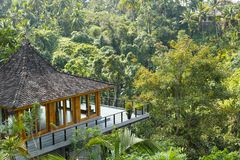 Resort in rainforest. High angle view of a yoga room facing rainforest Royalty Free Stock Images