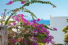 Sea view with little pink and yellow flowers. Resort sea view with little pink and yellow flowers Stock Photography