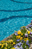 Resort swiming pool and flowers Stock Photos