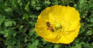 Resorte colorido, cielo de la abeja Fotografía de archivo libre de regalías