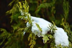 Resorte contra invierno fotos de archivo libres de regalías