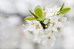 Resorte de la floración Foto de archivo libre de regalías