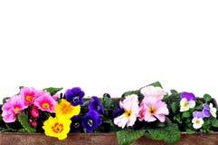 Resorte de la primavera del plantador Foto de archivo libre de regalías