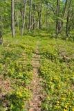 Resorte en bosque Foto de archivo