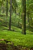 Resorte en bosque Foto de archivo libre de regalías