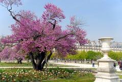 Resorte en París Foto de archivo libre de regalías
