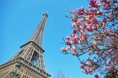 Resorte en París Fotos de archivo libres de regalías