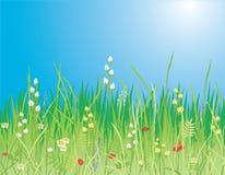 Resorte. Flores y hierba - vector Foto de archivo libre de regalías