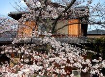 Resorte japonés Imagenes de archivo