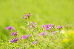 Resorte o fondo floral del verano Fotografía de archivo libre de regalías