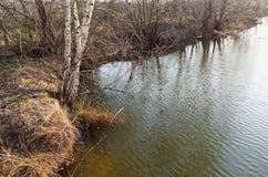 Resorte temprano Abedules sobre el agua Fotografía de archivo libre de regalías