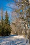 Resorte temprano en bosque Foto de archivo libre de regalías
