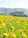 Resorte y las flores Foto de archivo