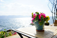 Resorts near the sea. Flowers in the resorts near the sea in the summer Stock Photography