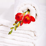 White towel and red fresia flowers Stock Photography