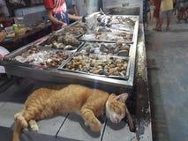 Respect de poissons de chat image stock