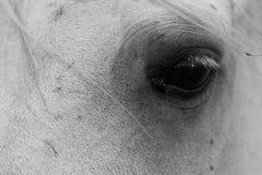 Respeto del caballo Fotografía de archivo libre de regalías